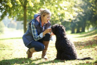 Dog friendly attractions near our parks