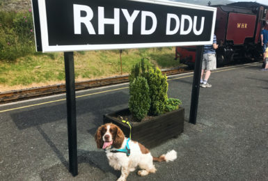 A dog friendly day in Snowdonia