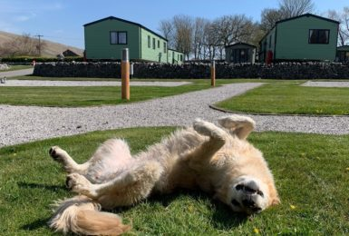Can dogs stay on caravan parks?