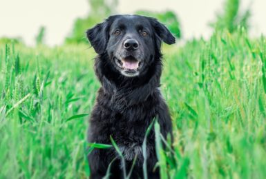 Top Tips for keeping your furry friends safe on long walks off park
