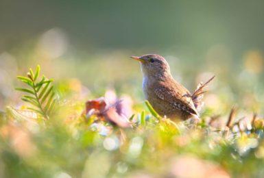 Create your own bird feeder